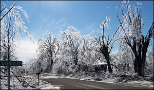 Ice storms are hell on trees too.  Trees with narrow crotch angles, like those that result from topping, are especially susceptible to ice damage.