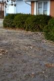 What's left of the front garden bed after repairing the broken water main